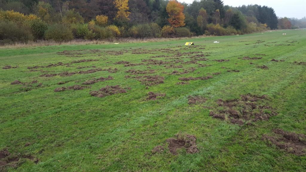 Wieder verwüsten Wildschweine die Bahn des Flugplatzes Hünsborn